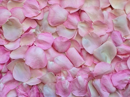 Владимирских молодоженов хотят штрафовать за лепестки роз, разбросанные у входа в ЗАГС