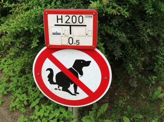 Берлин: Штраф в размере 1500 евро за собачьи экскременты!