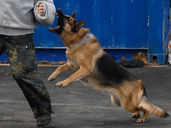 ФСИН запретила охранять заключенных слишком добрыми собаками