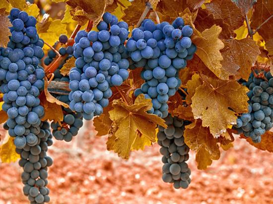 Время собирать виноград