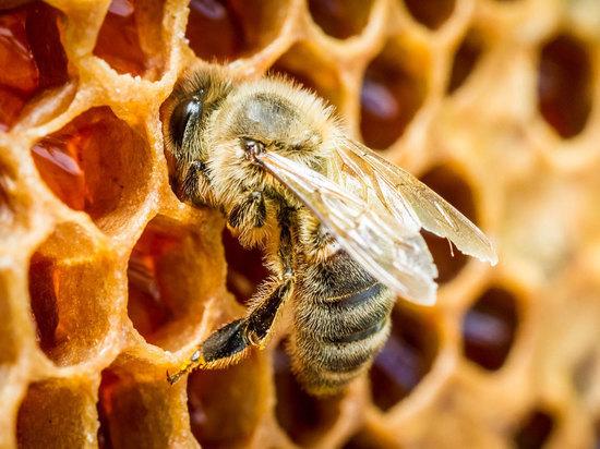 Что будет с планетой после смерти последней пчелы?