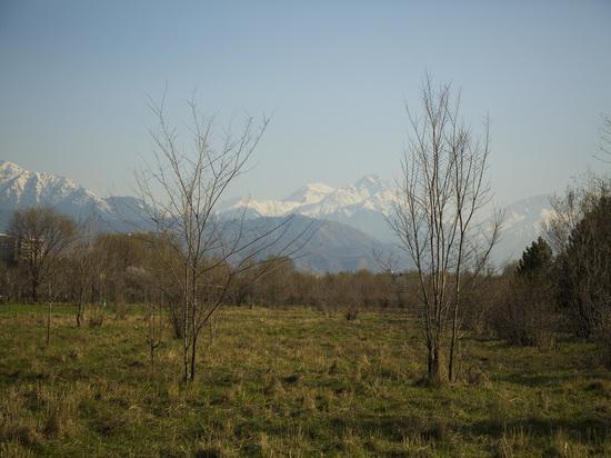 Безграмотное «благоустройство» убивает зеленые легкие Алматы