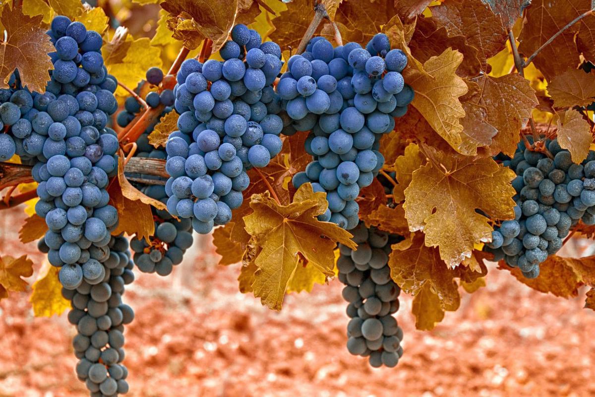 Открытка с урожаем винограда, подписать открытку лет
