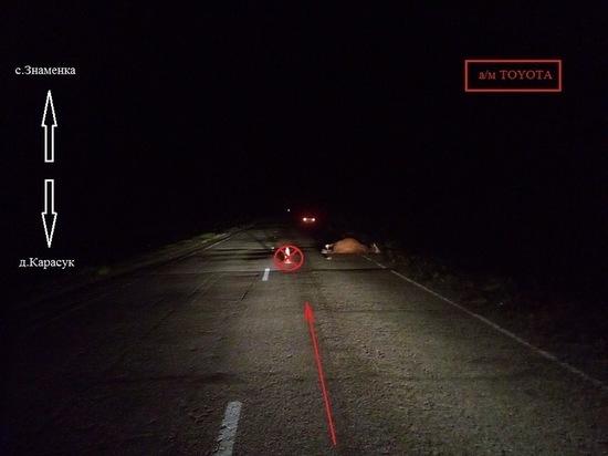 В Боградском районе  на дороге Знаменка-Карасук водитель иномарки врезался в корову