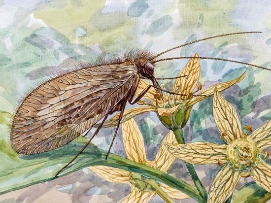 Палеонтологи нашли в янтаре неизвестный вид насекомого