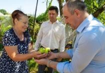 Рашиду Темрезову показали молодые мини-сады на подворьях в КЧР