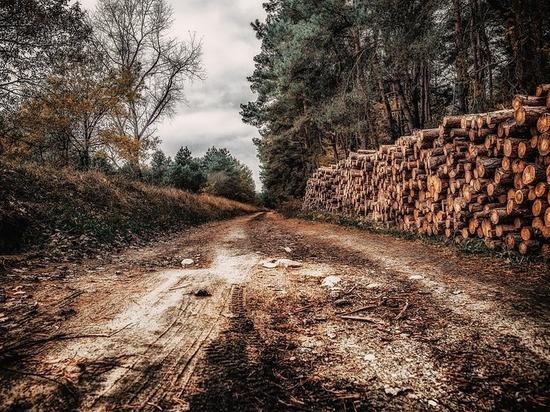 В Бурятии придумали, как остановить разбазаривание леса