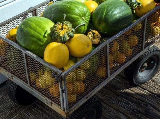 167 тонн еды вернули из Новосибирска в Среднюю Азию