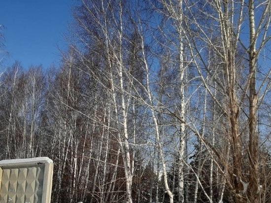 Челябинцы резко высказались против вырубки деревьев, подразумеваемой генпланом