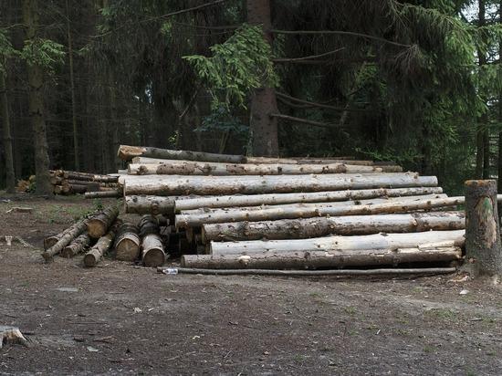 Незаконно вырубавших лес местных жителей осудили в Удмуртии