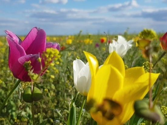 Калмыцкие праздники включены в национальный календарь событий