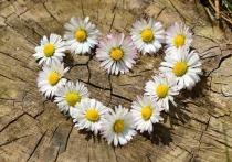 Уникальный для СКФО фестиваль цветов проходит в Кабардино-Балкарии