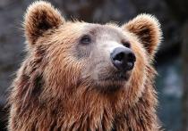 В Якутии женщина криком прогнала напавшего на неё медведя