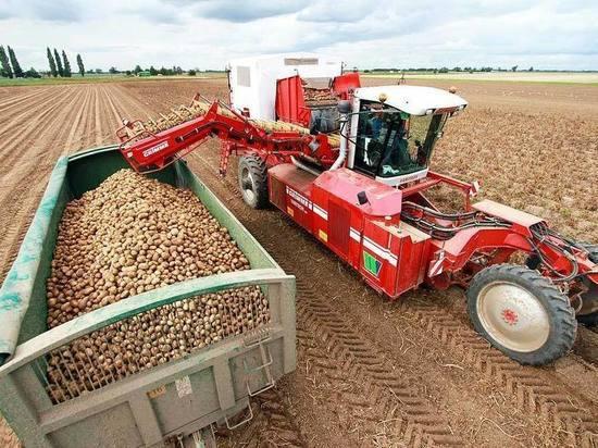 Нижегородские аграрии собрали 80 тысяч тонн картофеля
