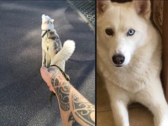 Зоозащитница похитила собаку, посчитав, что хозяин плохо за ней смотрит