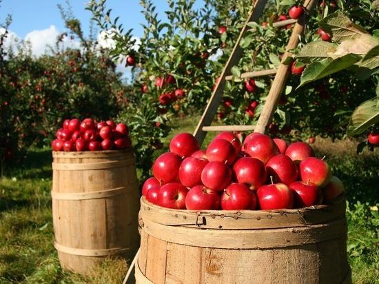 ЕС приостановил импорт яблок и груш из Украины