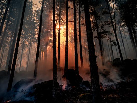 Российская авиакомпания посадит миллион деревьев в Сибири