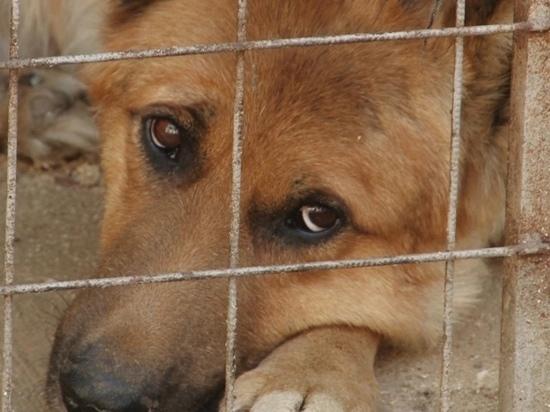 Журналисты проверили, как живет пес, попавший в гудрон в Барнауле