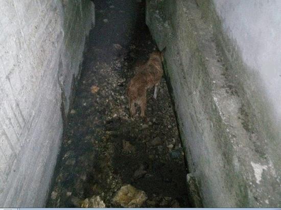 Новороссийские спасатели освободили собаку из ливневого коллектора