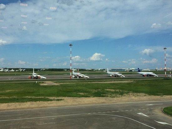 После инцидента с А321 аэропорт обезопасят от птиц «зеркальными шарами»