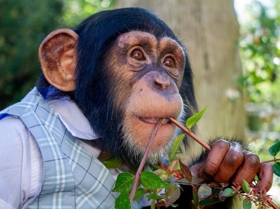 В Ялте отметили День рождения звёздной обезьянки