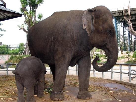Слон забрел погулять в белорусскую деревню