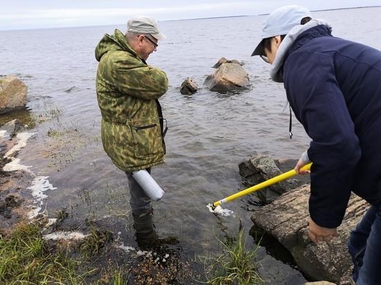 Беломорчане связывают исчезновение чаек с «северодвинским инцидентом»