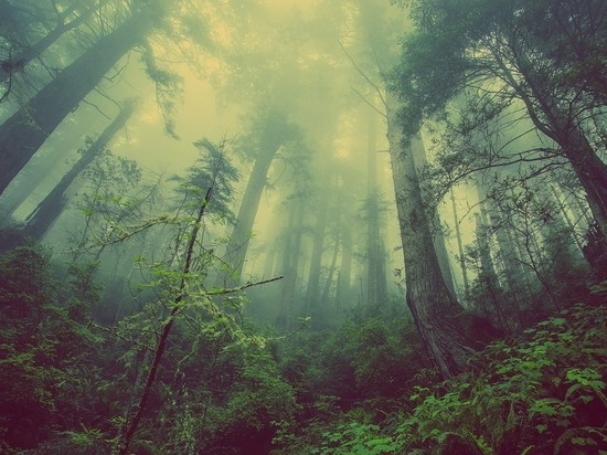 """""""Срочно менять законы"""": ученый объяснил, как спасти российский лес"""