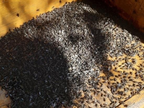 Жители тульских сел выносят дохлых мух ведрами