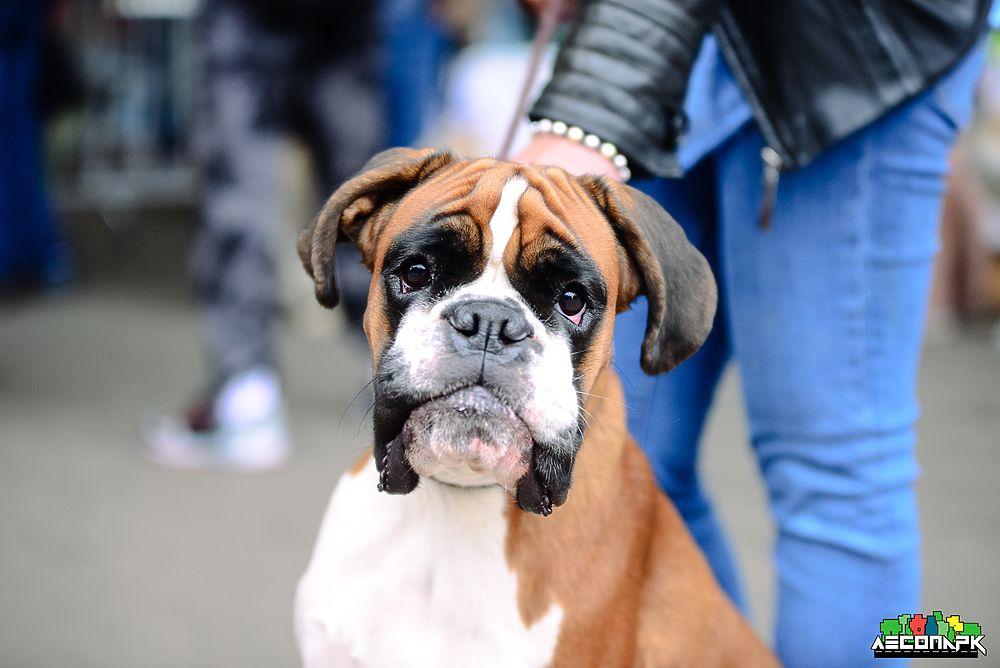 В рязанском Лесопарке прошла региональная выставка собак всех пород