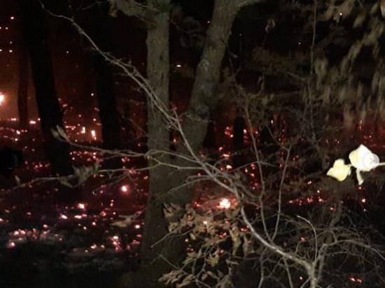 Крупный пожар в лесу под Геленджиком тушили несколько часов