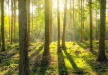 Школьники из Тверской области обсудят вопросы сохранения лесного фонда