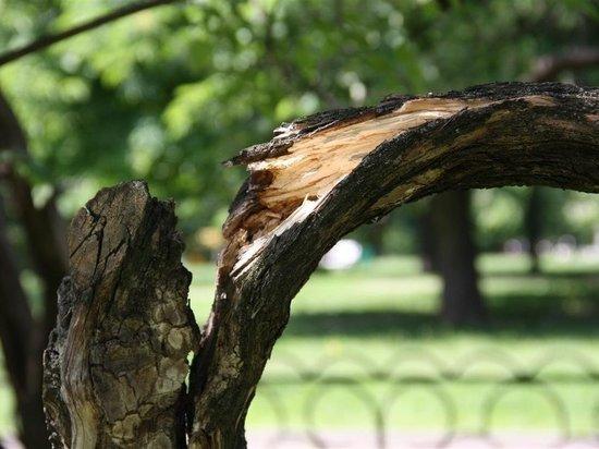 В краснодарском детсаду на детей упало дерево: один из малышей скончался