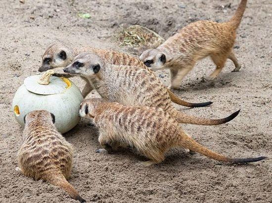 В Новосибирском зоопарке ждут дачников-благотворителей