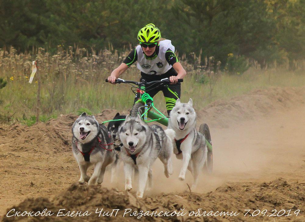 Под Рязанью прошли гонки на ездовых собаках