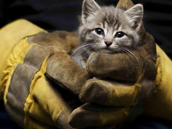 Новосибирские спасатели взломали погреб ради котенка