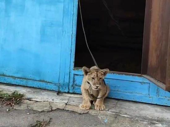 В центре Москвы изъяли львенка