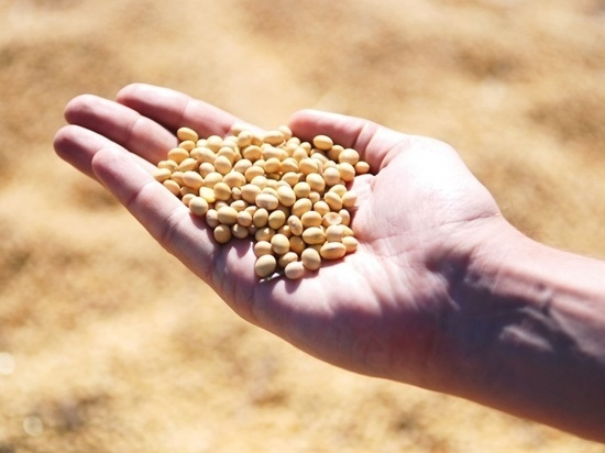 В Ставропольском крае убирают урожай соевых бобов