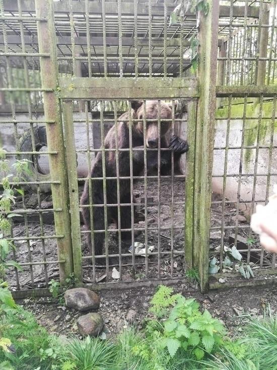 Министр природных ресурсов прокомментировал историю брошенной в клетке медведицы