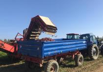 Аграрии Ямала приступили к уборке картофеля