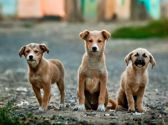 Уфимские спасатели на выходных спасли двух собак