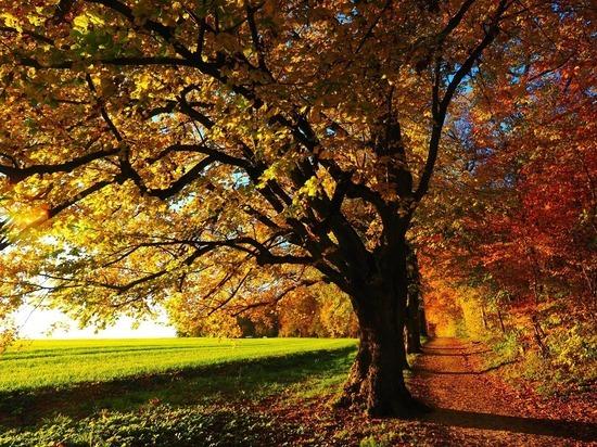 12 и 13 сентября станут в Удмуртии самыми теплыми днями недели