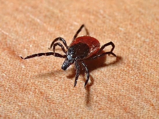 Множественные случаи укусов клещами зафиксированы в Удмуртии