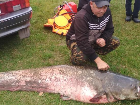 Рязанец поймал в Оке сома весом более 70 килограммов