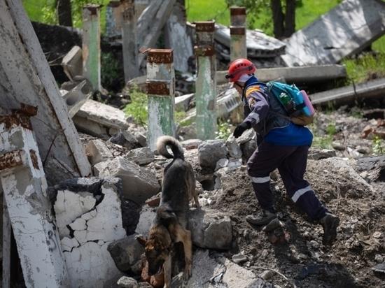 В Новосибирской области прошла аттестация собак-спасателей