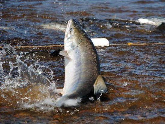 За рыбалку с подростком жителю Магадана грозит 5 лет тюрьмы