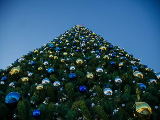 Тула в сентябре готовит миллионы на новогоднюю ель