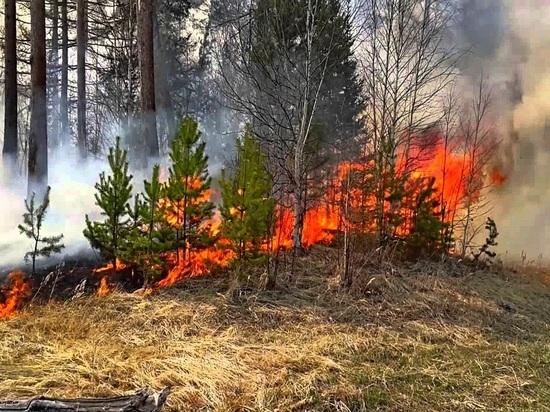 В Ярославских лесах сохраняется высокий класс пожарной опасности