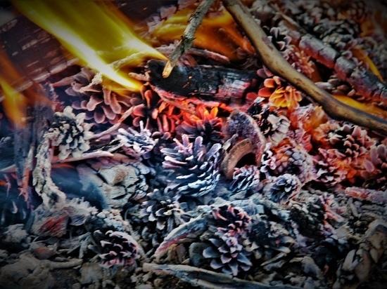 Жительница Карелии оплатит тушение лесного пожара, возникшего по ее вине