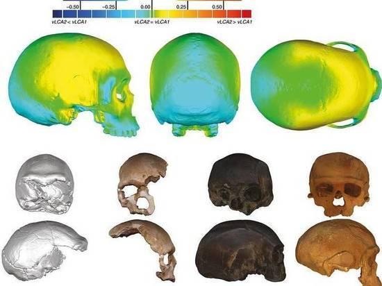 Антропологи выяснили, где жил и как выглядел общий предок людей